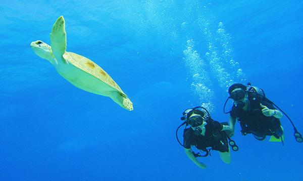 カンクン体験ダイビング