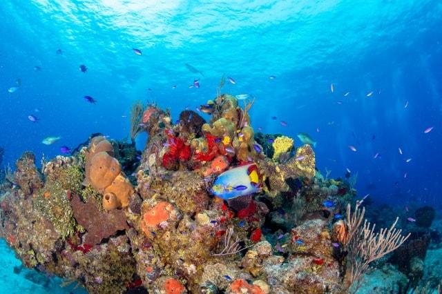 世界第二位の環礁